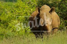 Rhinocerus Animal Photography, Elephant, Pets, Animals, Animales, Nature Photography, Animaux, Animal Pictures, Elephants