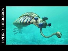 World's 10 Most Mysterious Underwater Anomalies - YouTube