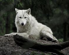White Wolf (on etsy)
