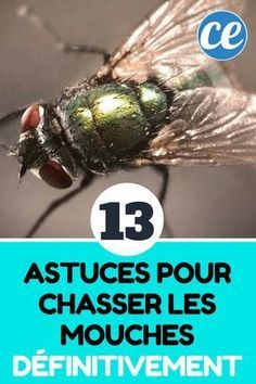 13 Natural Tips for Hunting Flies Definitively. Flylady, Household Cleaners, Digital Watch, Housekeeping, Clean House, Good To Know, Tricks, Cleaning Hacks, Life Hacks