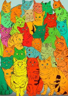 outsider cat