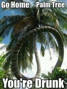Drunk palm tree