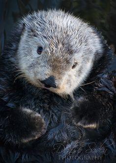 Coy Otter by *DeniseSoden