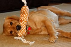 Dog toy sewing pattern