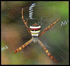 Signature Spider by Photo.net photographer Kallol R.