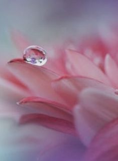 Water Drops, Rain Drops, Water Drop Photography, Witchcraft Spells, Dew Drops, Love Spells, Nature Scenes, Pink Aesthetic, Holidays And Events