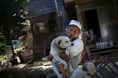 After the nuclear meltdown at the Fukushima power plant in March 2011, residents within 12 miles of the area were forced to evacuate, leaving their farm and domestic animals behind. Only a few returned to take care of them.