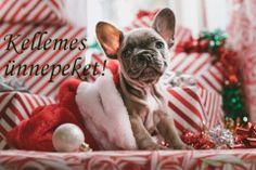 brindle French bulldog puppy in Santa hat Christmas Puppy Bulldog Puppies, Cute Puppies, Cute Dogs, Frenchie Puppies, Yorkie Puppy, Brindle French Bulldog, French Bulldogs, Sweet Dogs, Photo Scavenger Hunt
