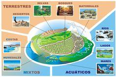 Ecosistemas: Terrestres, acuáticos y mixtos.