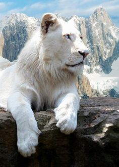White lion by Peasant