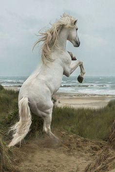 Ein Pferd in den Sanddünen. #APASSIONATA