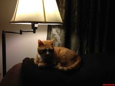 he is … the most interesting cat in the world. - http://cutecatshq.com/cats/he-is-the-most-interesting-cat-in-the-world/