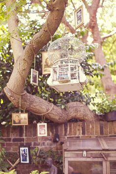 Hanging photos and antique bird cages from trees... could hand photos from bird cage thing in front of wedding venue