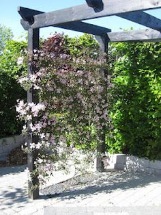 Klematis til pergola Patio Pergola, Pergola Shade, Backyard Landscaping, Unique Gardens, Back Gardens, Outdoor Gardens, Garden Arbor, Garden Trellis, Minimalist Garden