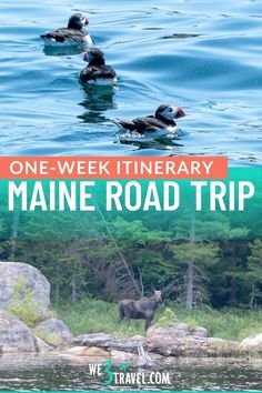Use this Maine road trip to plan your trip to Vacationland this summer. Find out how to get off the beaten path and away from people in the Maine Highlands and Downeast and get the best of both worlds from lighthouses and rocky coast to moose, lakes, and Mt Katahdin. Maine Road Trip, Baxter State Park, Mount Desert Island, New England Travel, Acadia National Park, Usa Travel, Plan Your Trip, Beautiful Sunset, Lighthouses
