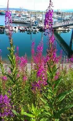 Harbor view in Homer Alaska