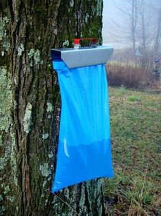 Maple Syrup Sap Sack Tapping Kit - Tap 2 Maple Trees. A modern and easy way to collect maple sap in your own back yard.