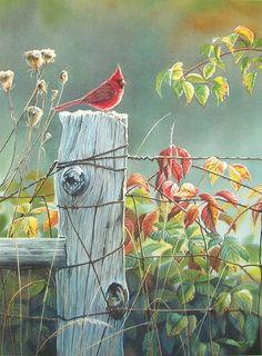 Leanin' Tree Susan Bourdet September Morning Cardinal Bird Blank Greeting Card