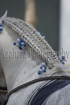 Azahara Photography: Jornada de Puertas Abiertas - Yeguada Militar de Jerez Adelfa III trenzada