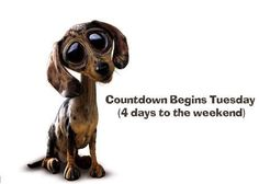 Tuesday Countdown quotes quote days of the week tuesday tuesday quotes happy tuesday tuesday quote Happy Tuesday Quotes, Tuesday Humor, Inspiring Quotes Tumblr, Tumblr Quotes, Inspirational, Hello Tuesday, Funny Google Searches, Emo Quotes, Weekend Quotes