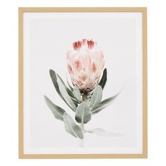 Modern Spaces, Botanical Prints, Nativity, Blush, Framed Prints, Tapestry, Painting, Freedom, Living Room