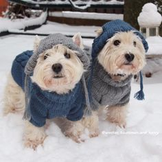 Oh my goodness. Westies all decked out in Granny's knitwear. Animals And Pets, Baby Animals, Funny Animals, Cute Animals, Beautiful Dogs, Animals Beautiful, Cute Puppies, Cute Dogs, Westie Puppies