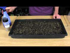 ▶ How To Grow Watercress Indoors - YouTube