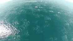 'Dolphin stampede' off the coast of Dana Point, California.~~There are a bunch of videos here of things I'll never get to see.  Thank you, drones!!!