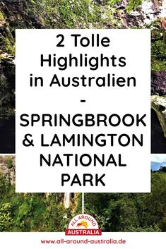 Über den Link gelangst du zu 2 tollen Highlights im Springbrook & Lamington National Park in Australien. Brisbane, Sydney, Roadtrip, Highlights, National Parks, Australia, Link, Blog, Australia Tourist Attractions