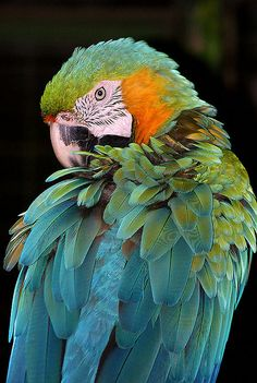 Macaw - Watch your back !