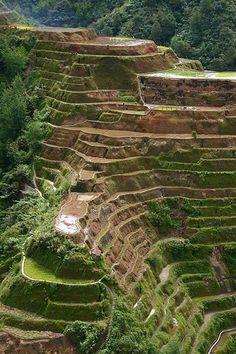 Banana rice terraces, Philippines Cordilleras