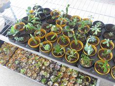 Aspecto Ambiental  - A venda de plantas na Loja da Torre, gera influência na conscientização no aumento da área verde e proporciona uma melhora no microclima do ambiente.