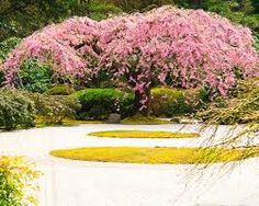 Image result for portland japanese garden spring