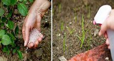 Néhány kerti trükk a gyomok és kártevők ellen, úgy hogy még a talaj minőségén is könnyedén javíthatunk! :D