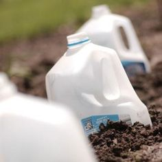 7 ways to use milk jugs in your garden - who knew old milk bottles could be so useful? #homesfornature #recycle #reuse