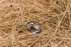 www.l'afriquephotography.co.za Class Ring, Wedding Rings, Engagement Rings, Jewelry, Heidelberg, Jewellery Making, Jewerly, Jewelery, Commitment Rings