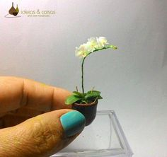 """Phalaenopsis orchid - modeled by hand in cold porcelain modeling clay """"biscuit"""". 1:12 scale."""