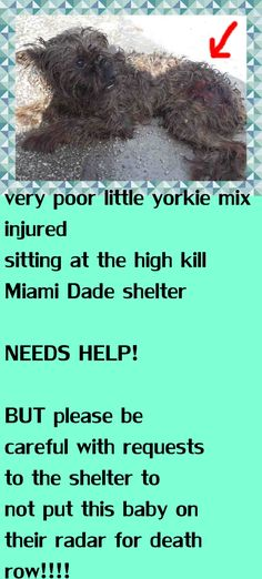 VICTOR (A1708674) I am a male black and gray Yorkshire Terrier mix. The shelter staff think I am about 2 years old. I was found as a stray and I may be available for adoption on 07/05/2015. https://www.facebook.com/urgentdogsofmiami/photos/pb.191859757515102.-2207520000.1435699500./1003872569647146/?type=3&theater