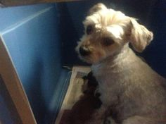 coco               Name : coco  Animal ID : 24757600  Breed : Maltese / MixLearn more Age : 10 years 2 months  Gender : Female  Color : Brown / Silver  Spayed/Neutered : No  Size : Medium         Pet Memo  If you think you have found this pet, please contact Town of Hempstead Animal Shelter at (516) 785-5220