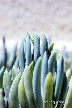Beautiful greens | Rolling Greens