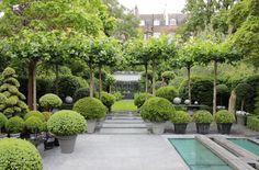 Garten mit modernem Design und Heckenpflanzen                                                                                                                                                                                 Mehr