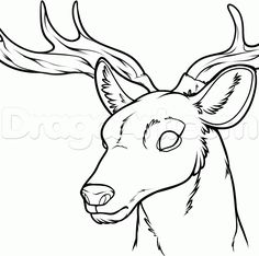 How to Draw a Deer Head, Step by Step, forest animals, Animals, FREE Online Drawing Tutorial, Added by Dawn, September 17, 2013, 4:57:00 am
