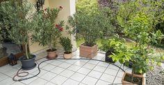 Spätestens zur Reisezeit sind automatisch gesteuerte Bewässerungen gefragt. Hier zeigen wir Ihnen, wie Sie für Ihre Kübelpflanzen eine automatisch gesteuerte Tröpfchenbewässerung installieren.