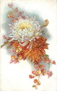 chrysanthemums, orange bloom below  white above, in front of different flower & foliage