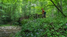 The Little River headwaters region of the Smokies was heavily logged in the early 20th century. As a result, a community called Elkmont sprung up in the valley below to support the lumberjacks and t…