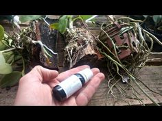 Make It Yourself, Youtube, Small Backyard Gardens, Magic Herbs, Fruit Ideas, Planting Flowers, Gardening Tips, Rose Trees, Planters