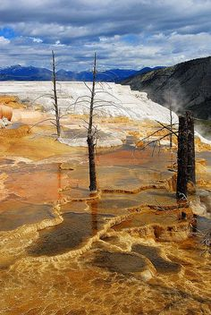 The Canary Spring - Mammoth Hot Springs, Yellowstone National Park, Wyoming Pinned By Wondrous http://www.wondrous.com.au