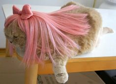 Cat & dog wigs, Halloween pet costumes by Cushzilla! Lady Gaga wigs for cats, Scottish Fold beret & necktie. Pet Halloween Costumes, Pet Costumes, Halloween Cat, Crazy Cat Lady, Crazy Cats, Weird Cats, Funny Cats And Dogs, Cute Cats, Lady Gaga Wig