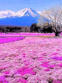 """Red Carpet"" for #Fuji"