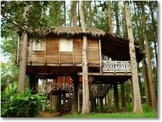 Tropical Tree House
